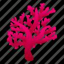 coral, reef, star, summer, water