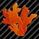 coral, floral, hand, tree, underwater, water