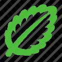 leaf, news, eco, nature