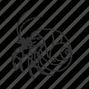 crab, crustacean, decapod, hermit, hermit crab, paguroidea, small crustacean icon