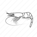 crustacean, ocean shrimp, prawn, seafood, shrimp icon