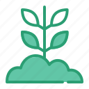 agriculture, farm, nature, sprout