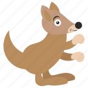 animal, kangaroo, squirrel, wallaroo, zoo icon