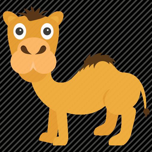 animal, camel, desert, dromedary, egyptian icon