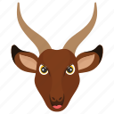 antelope, mountain goat, chamois, animal, mouflon