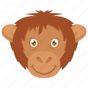 monkey, baboon, monkey face, chimpanzee, animal