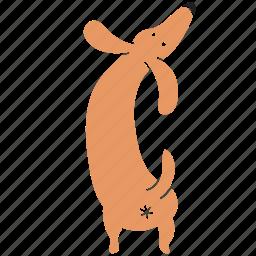animal, ass, breed, butt, dachshund, dog, pet icon