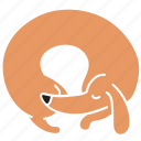 animal, breed, curl, dachshund, dog, pet, sleep icon