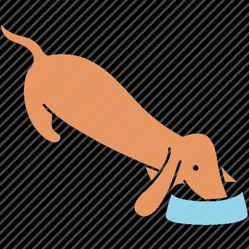 animal, breed, dachshund, dog, eat, food, pet icon