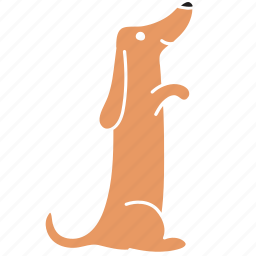 animal, breed, dachshund, dog, hind, pet, stand icon