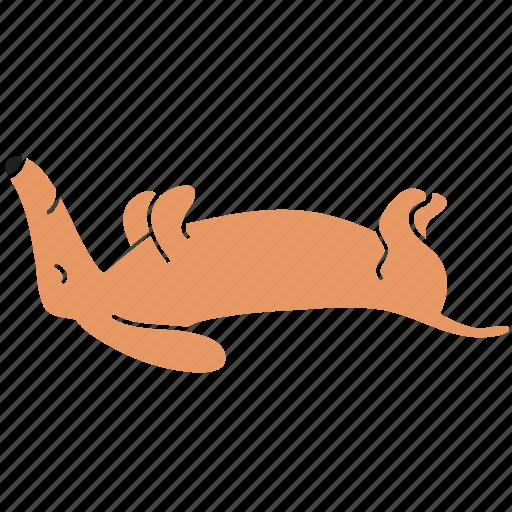 animal, breed, dachshund, dog, lie, pet, sleep icon