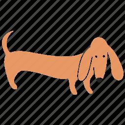 animal, breed, dachshund, dog, look, pet icon