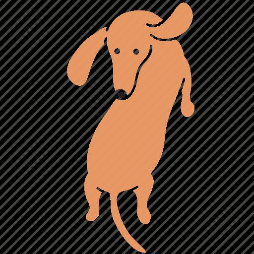 animal, around, breed, dachshund, dog, pet, turn icon