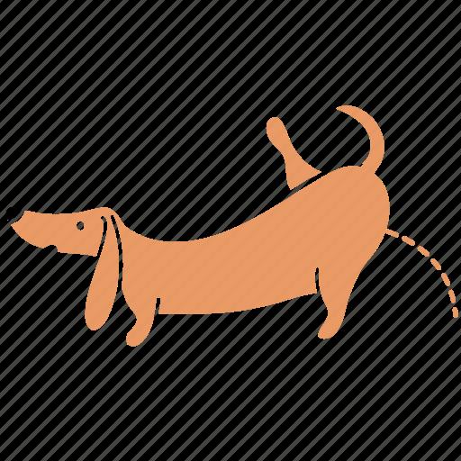 animal, canine, dachshund, dog, pee, pet, wee icon