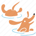 animal, breed, dachshund, dog, pet, swim, water icon