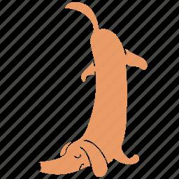 animal., canine, dachshund, dog, pet, tired, upside icon