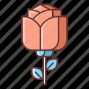 dating, rose, valentine icon