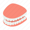 clean, dental, dentist, human, isometric, jaw, tooth