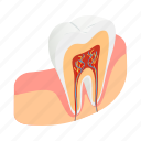 clean, dental, dentist, gum, isometric, medical, tooth icon