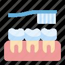 brush, dental, teeth