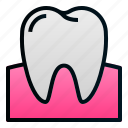 dental, dentist, doctor, gum, health, molar, tooth icon