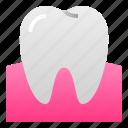 dental, dentist, doctor, gum, health, molar, tooth