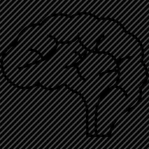 brain, design, genious icon