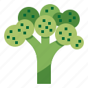 broccoli, diet, nutrition, vegetable icon