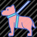 dog, pet, service icon