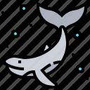 animal, fish, underwater, whale