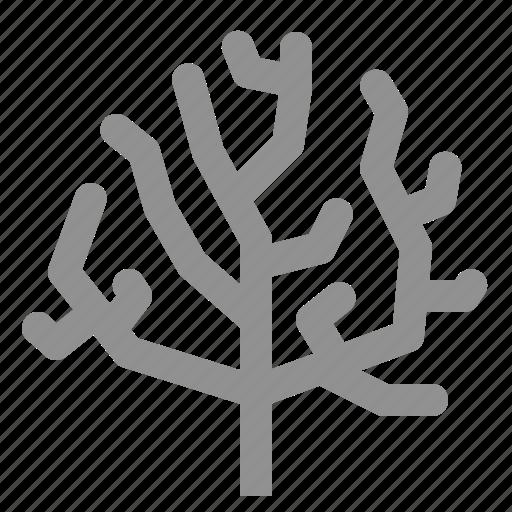 aquatic, coral icon