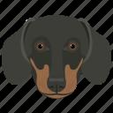 animal, dog, dog breed, domestic dog, rottweiler icon