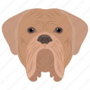 animal, british bulldog, bulldog, domestic animal, english bulldog icon