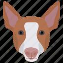 animal, cattle herding dog, dog, pembroke welsh, welsh corgi icon