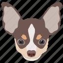 chihuahua, companion dog, dog, domestic animal, smallest dog icon