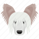 animal, dog, dog breed, sheltie, shetland sheepdog icon