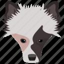 animal, border collie, dog, dog breed, herding dog icon