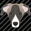 animal, aussie, australian shepherd, dog, dog breed icon