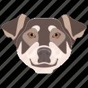 animal, bernese mountain, dog, dog breed, mountain dogs icon