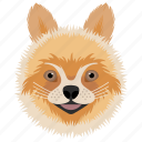 animal, dog, domestic animal, pom dog, pomeranian icon