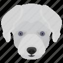 animal, dog, dog breed, maltese dog, small dog icon