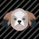 animal, cavalier king, companion dog, dog, toy dog icon
