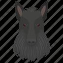 animal, dog, dog breed, domestic dog, great dane icon