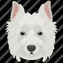 animal, dog, domestic animal, siberian husky, working dog icon