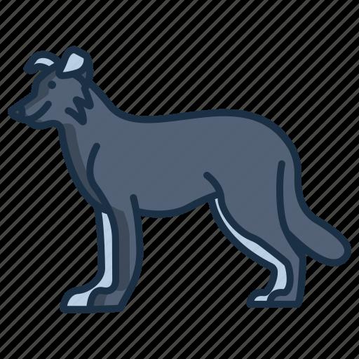 Border, collie icon - Download on Iconfinder on Iconfinder