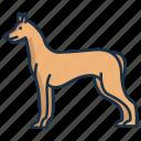 pharaoh, hound