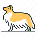 breed, canine, collie, dog icon