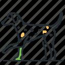 breed, canine, dalmatian, dog icon