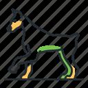breed, canine, doberman, dog icon