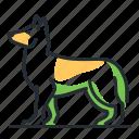 breed, canine, dog, shepherd icon